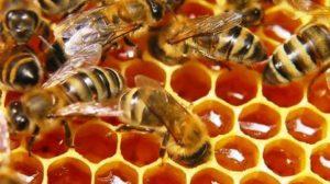 корм для пчел весной