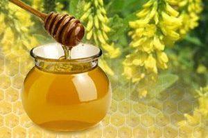 порфироносный эспарцет мед