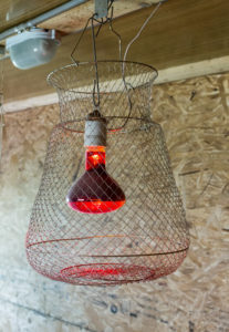 инфракрастная лампа для курятника