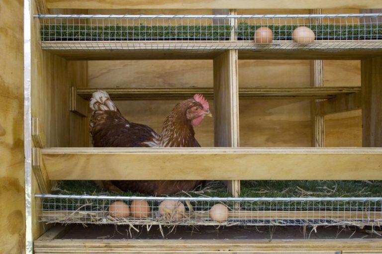 Как сделать двойное дно для курицы