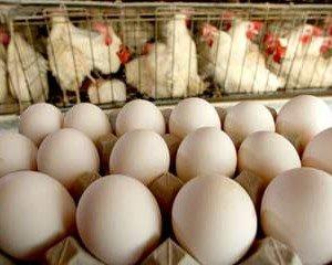 как получить яйцо