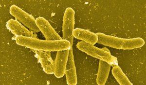 микроб сальмонеллы