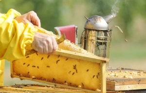 уход за пчелами1