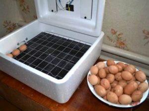 яйца для закладки