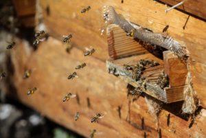 время пробуждения пчел