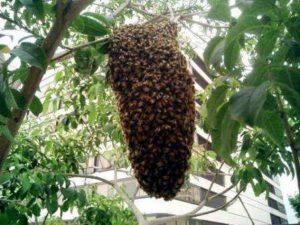 как избавиться от пчел самостоятельно