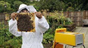 прибыльное дело пчелы