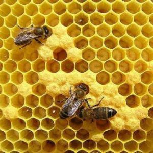 медикаменты для пчел