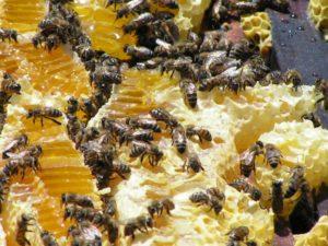 подготовка подкормки пчел