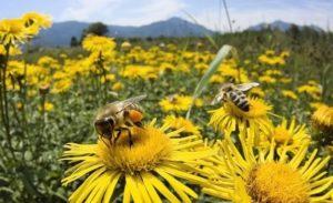 ориентирование пчел по запаху
