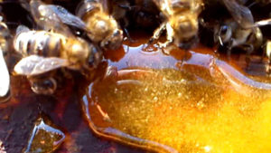подкормка пчел тружениц сиропом