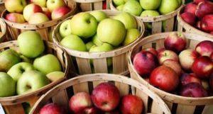 сорта яблонь для средней полосы