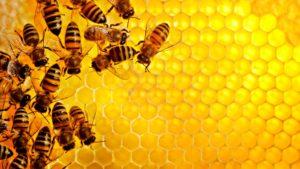 процесс изготовления воска пчелами