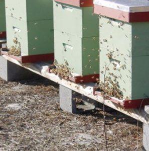 почему пчелы улетают из улья