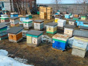 выставление пчел после зимы