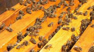 как объединить две семьи пчел осенью