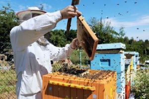 пересадка пчел