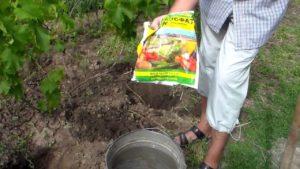 подкормка винограда готовым средством