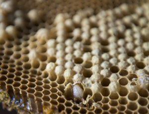 пчелы готовятся в зиму