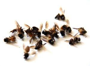 пчелы мертвы