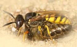 враги пчелы