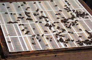 установка разделительной решетки для пчел