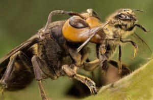 пчелиные враги