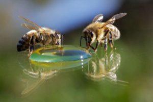 подкормка пчел на зиму сиропом