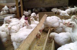 гиповитаминоз а у бройлеров цыплят