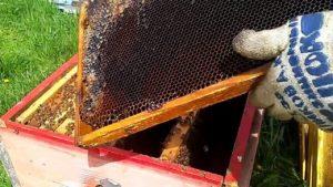 должный уход за пчелами