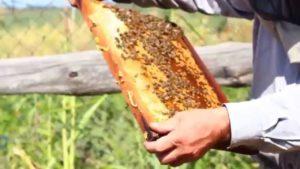 формирование гнезда пчел