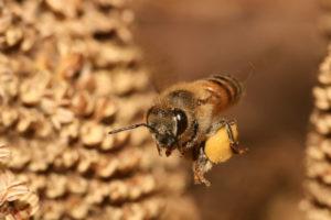 ориентирование пчел по природе