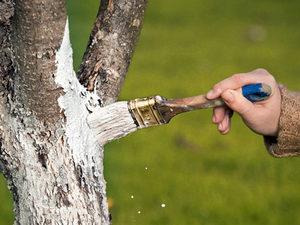 побелка яблоневых деревьев