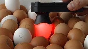 контроль яйца