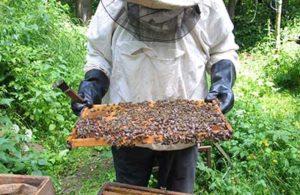 акарапидоз пчел лечение