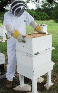 как ухаживать за пчелами
