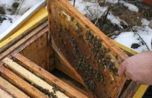 нозематоз пчел лечение