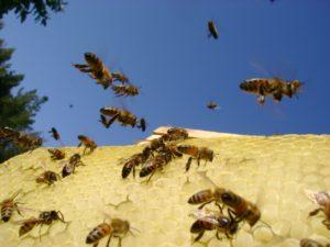 слет пчел