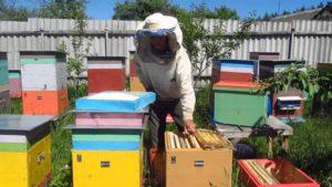 пересадка пчел весной