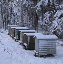 правила подготовки пчел к зимовке