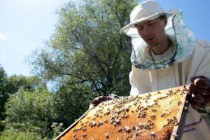лечение гнильца у пчел