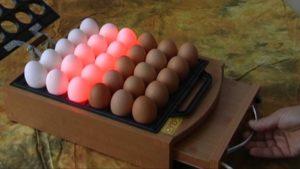 просвет яиц бройлера
