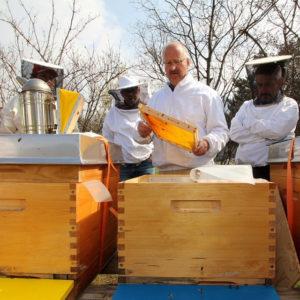 весенние работы с пчелами