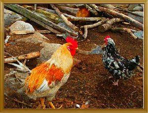 ленинградская порода кур