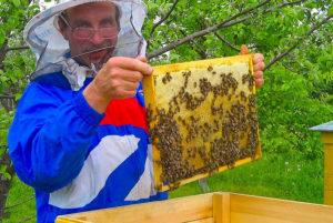 ревизия рамок пчел