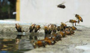 время подкормки пчел