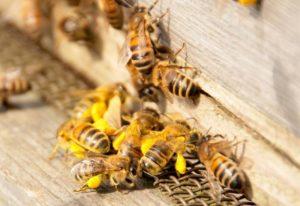 обязанности пчел