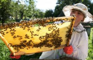 с чего начать уход за пчелами