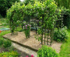 уход за виноградом в летнее время