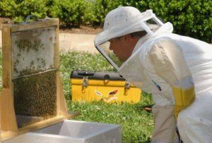 объединение пчелосемей